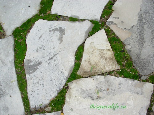 moss and flagstones