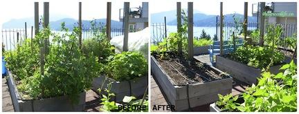before after garden