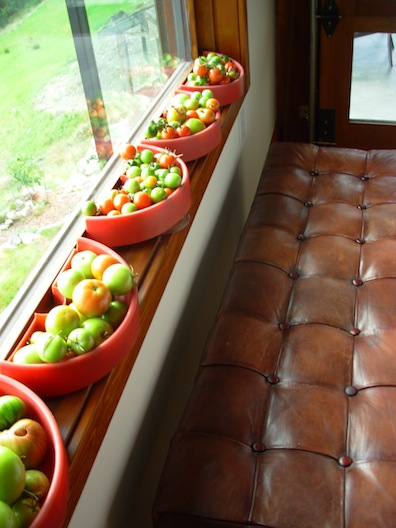 ripening tomatoes on red trays