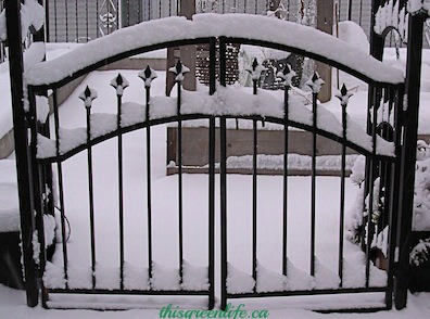 garden gate in snow