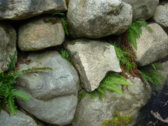 ferns between rocks