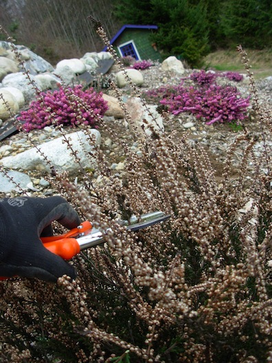trimming heather