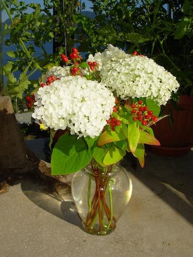 hydrangea and St John's wort
