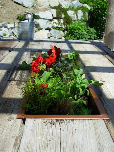 planted table box