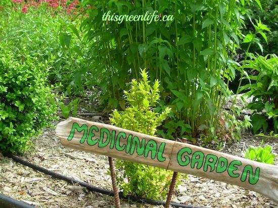 Medicinal garden.jpg