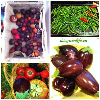 veggie harvest collage