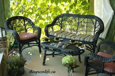 patio with grapevine screen